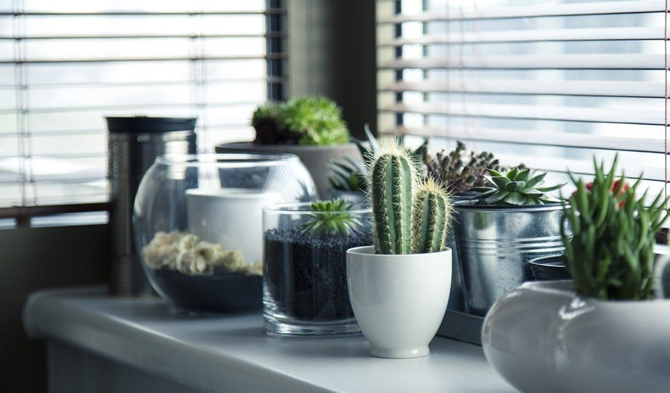 Practical Ideas for Apartment Gardening